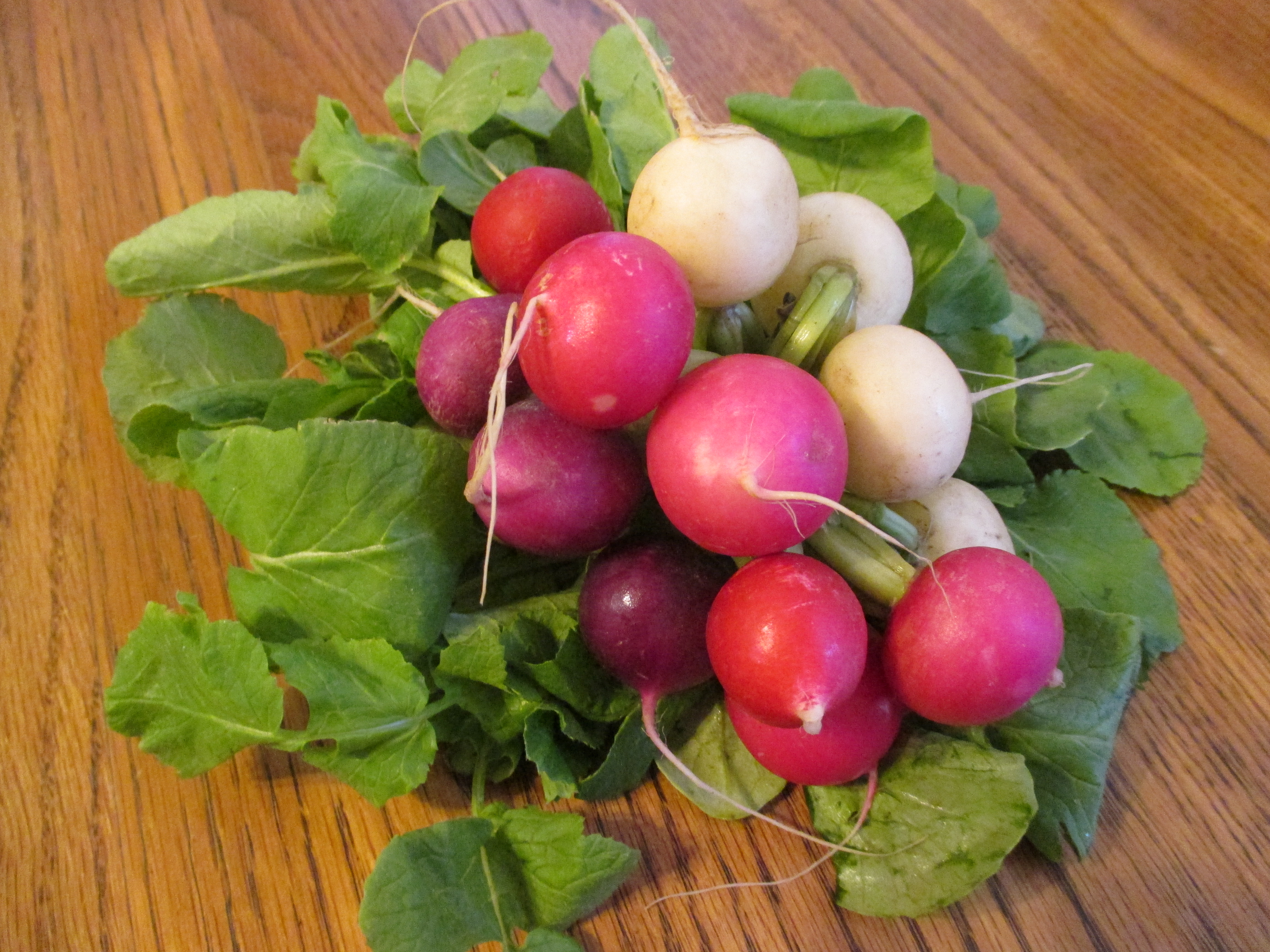 Planting turnips and radishes in 2018 54